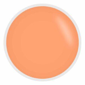 apricot (1)